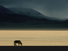 """""""Mongolian Steppe"""" by David Edwards 